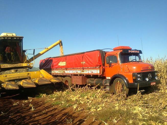Imagem do dia - Colheita de milho em Corbélia (PR), do produtor rural Claudir Postal. Envio de Fabrício Postal
