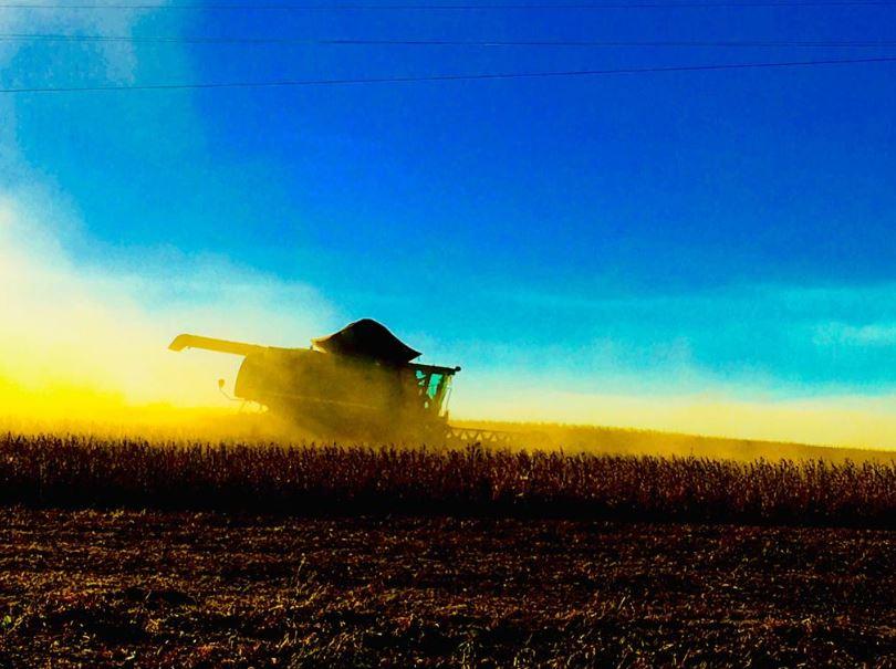 Colheita de soja em São Borja (RS). Envio de Geovane Ziegler