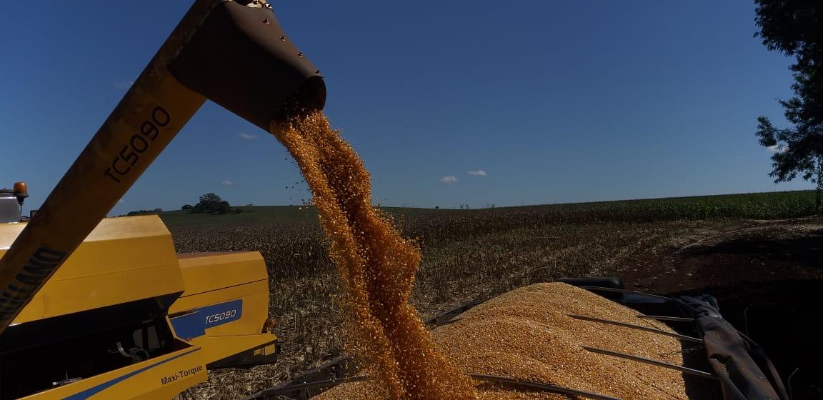 Colheita milho caminhão - ItambéPR - Valdir Fries