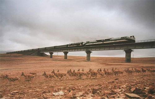 Trem da China 9