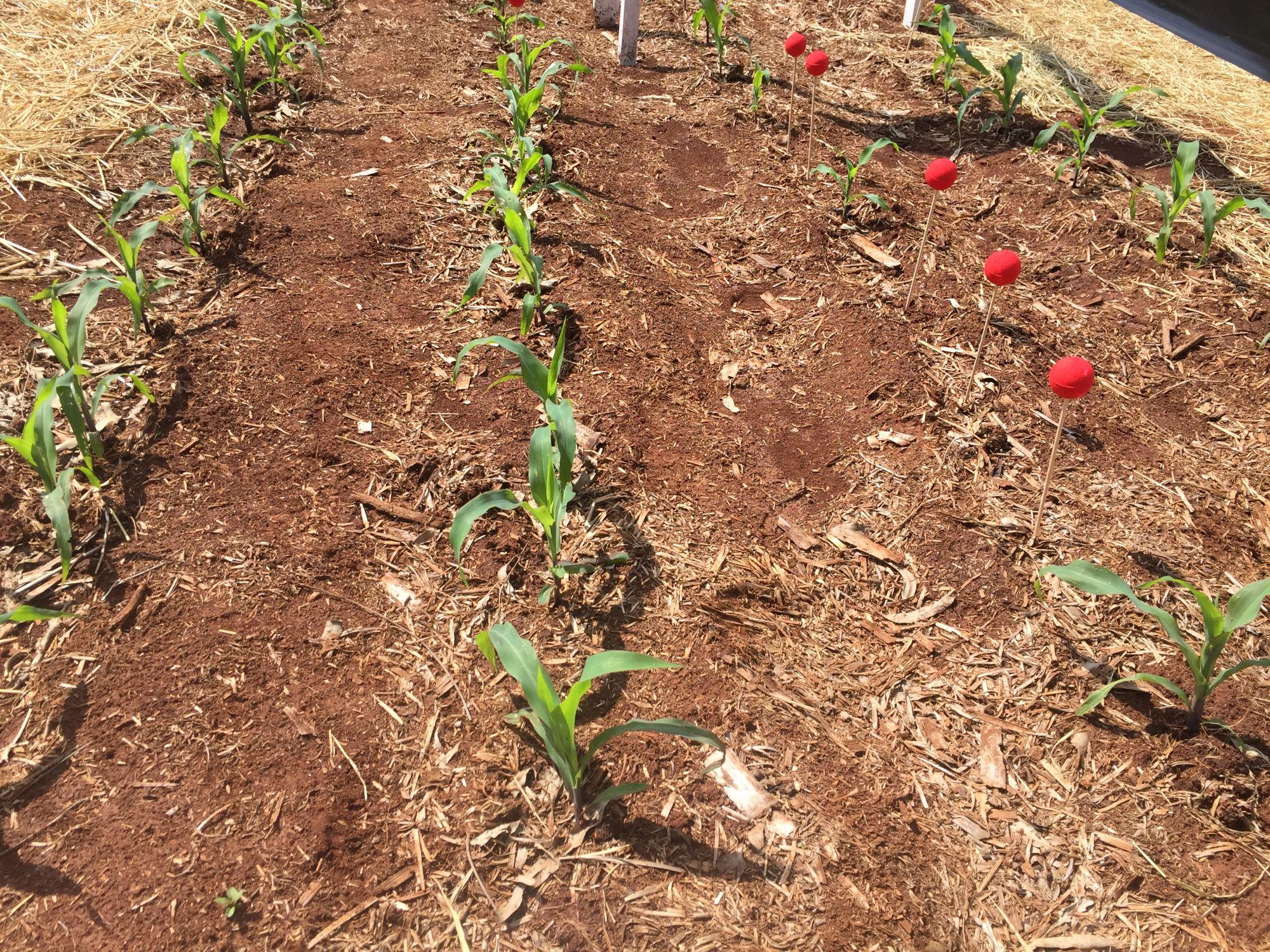 Agronomy Day Corteva - matéria