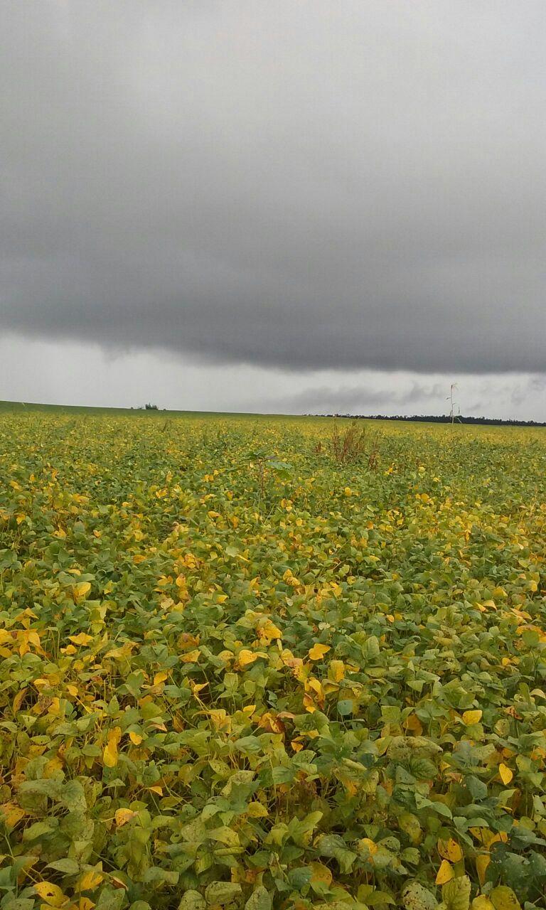 Chuvas na Colônia Santa Luzia, em Nueva Esperanza, Paraguai. Envio de Albino Giroleto
