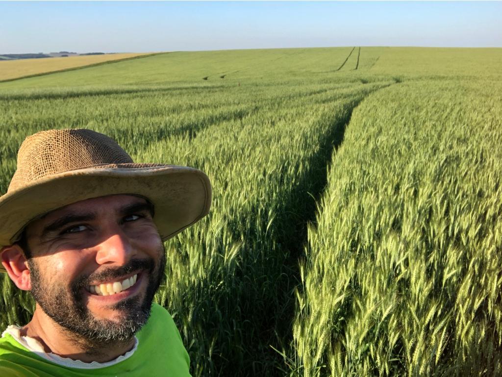 Lavoura de trigo Produtor Rural Juliano de Souza Carmo em Pontão (RS).