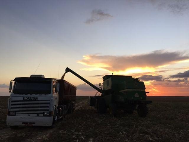 Colheita de milho 2018 em Macapá (AP) em 14 de outubro de 2018. Envio do produtor Ciro Joao Trombetta