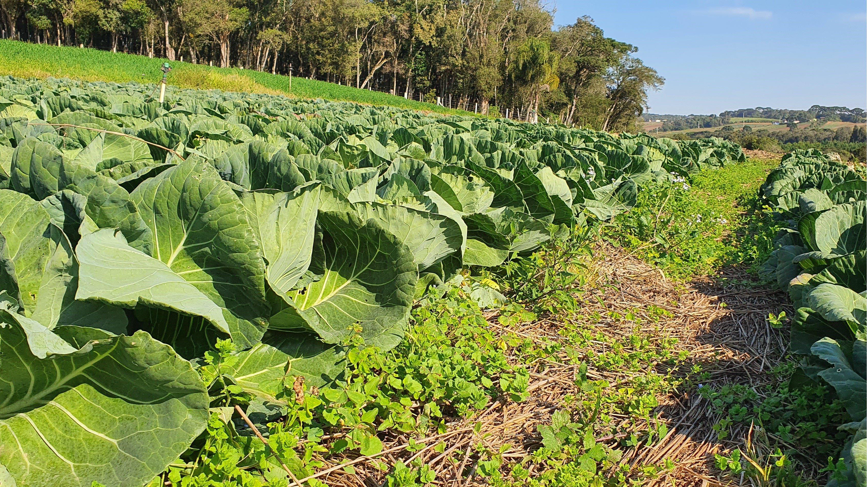 agricultura_familiar_sustentavel_parana