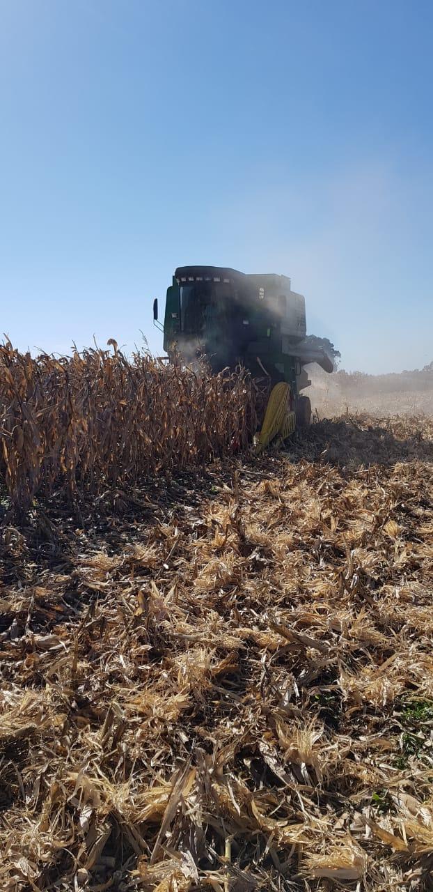 Iniciando a colheita de milho segunda safra em Naranjal- Paraguay. Envio de Cledison Conte