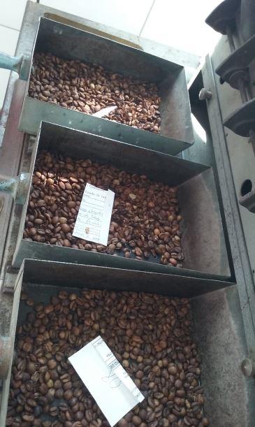 Finalizando as qualidades do café na xícara e acompanhando todo resultado gerado ao ano todo em São Pedro da União (MG). Envio de Neivaldo Amaral