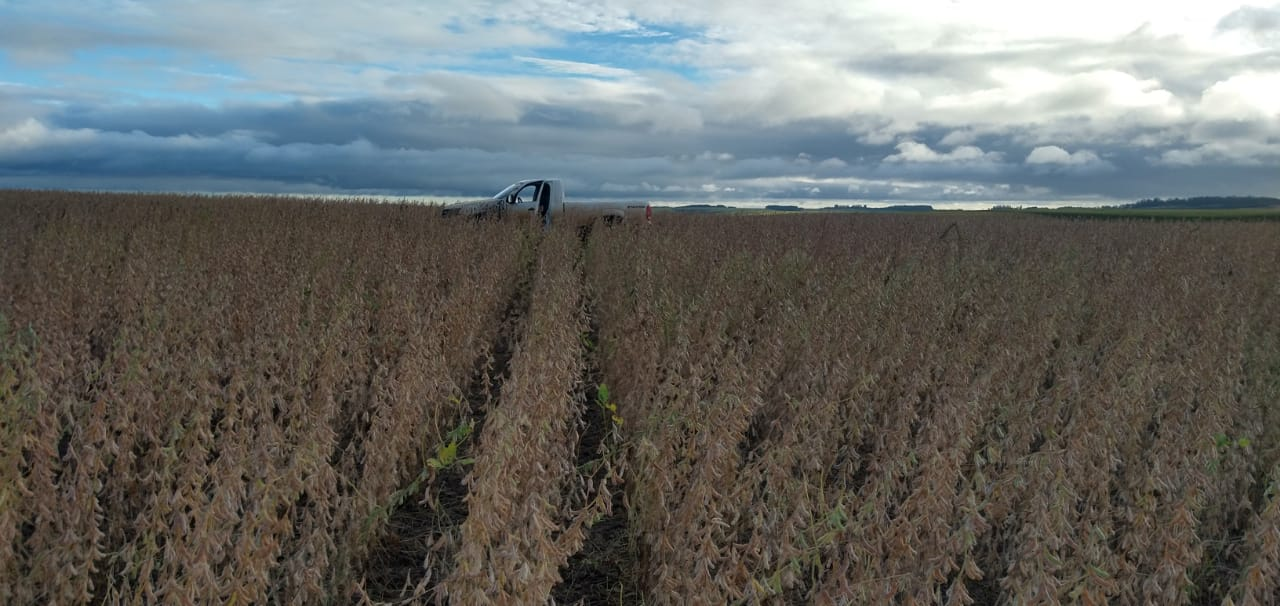 Lavoura de soja pronta para a colheita em Rosário do Sul (RS) - Jaderson Arigony