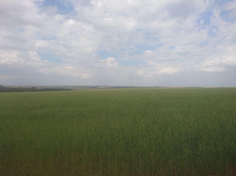 Área de trigo e as duas últimas é de preparativo para o plantio da safra de verão em Mbaracayú - Alto Paraná - PY. Envio do Produtor Rural Ademir Schneider