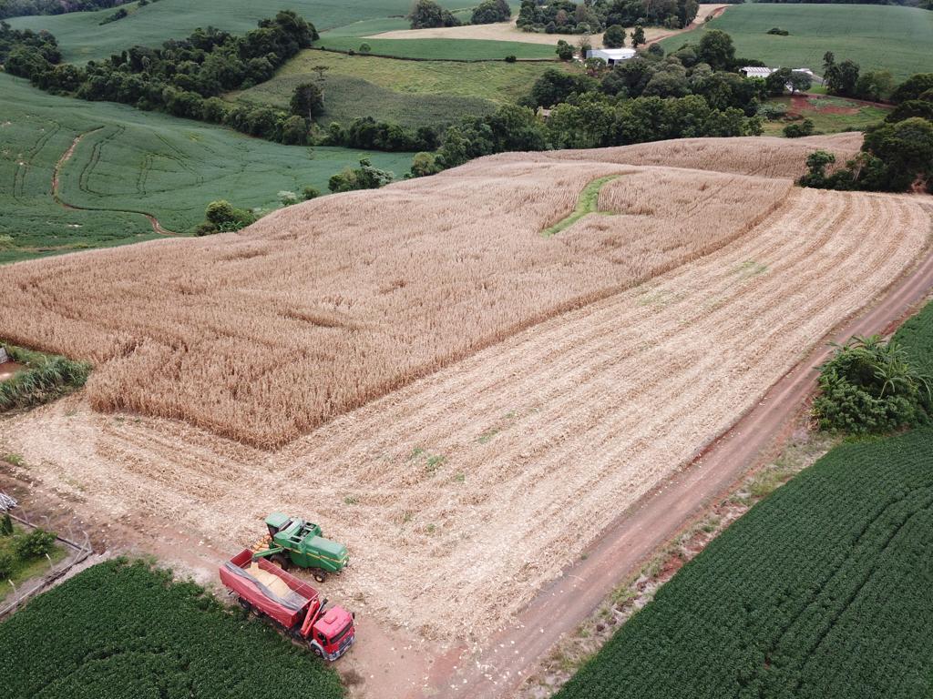 Colheita milho do produtor Luciano Colombo em Sarandi (RS). Envio de Tiago Colombo