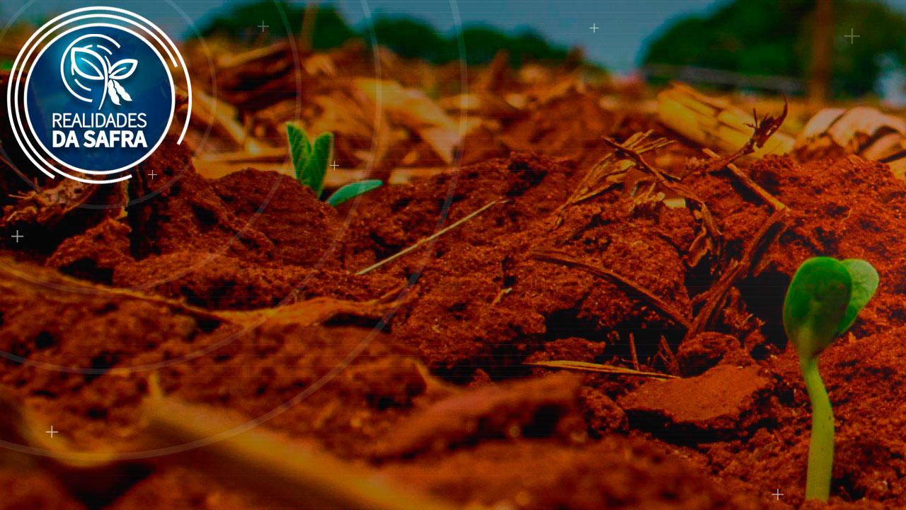 Plantio da soja se encaminha para o final em Ponta Grossa/PR e expectativa é de boa produtividade - Notícias Agrícolas