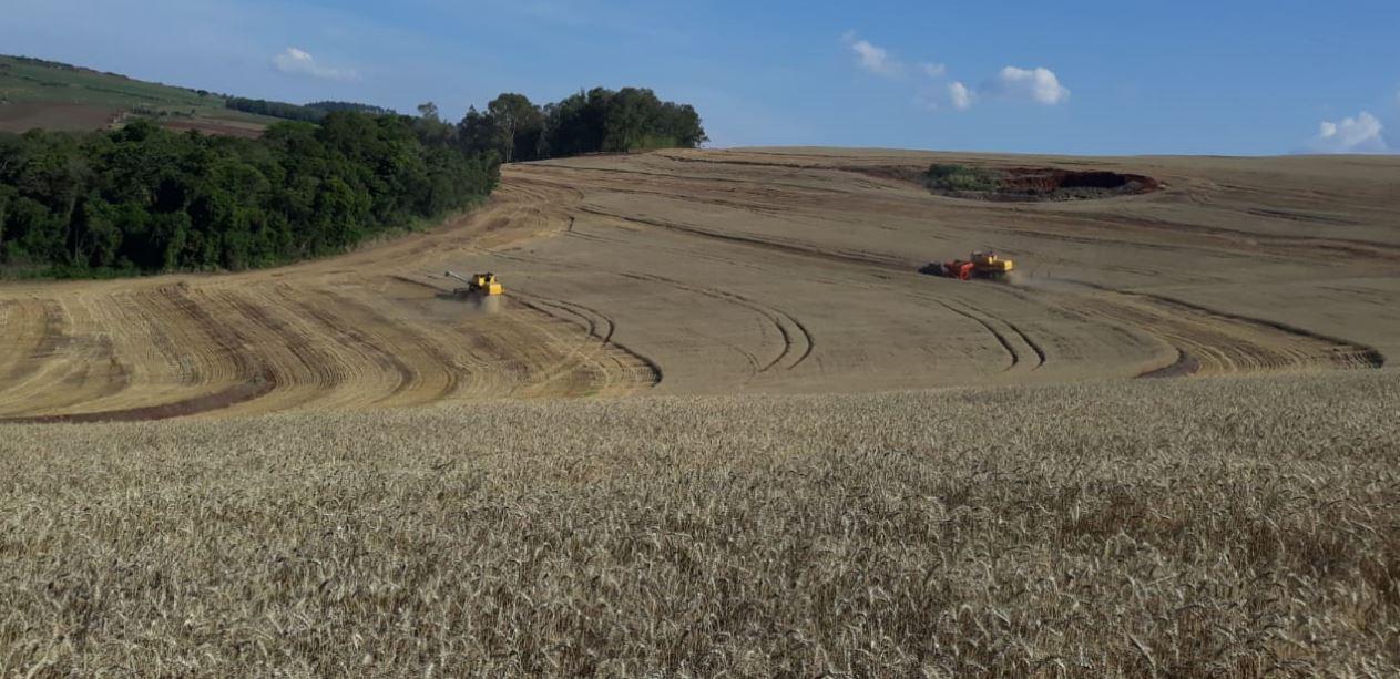 Colheita de trigo no em Tamarana (PR). Envio de Janaína Barbosa