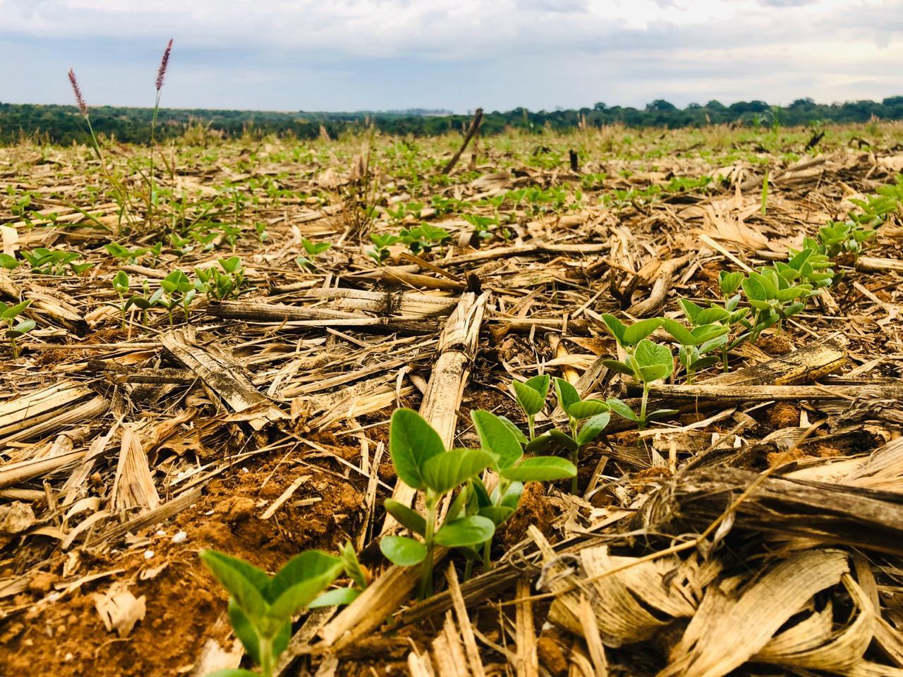 Semeadura de soja em Rio Verde (GO). Envio Alex Zamonaro