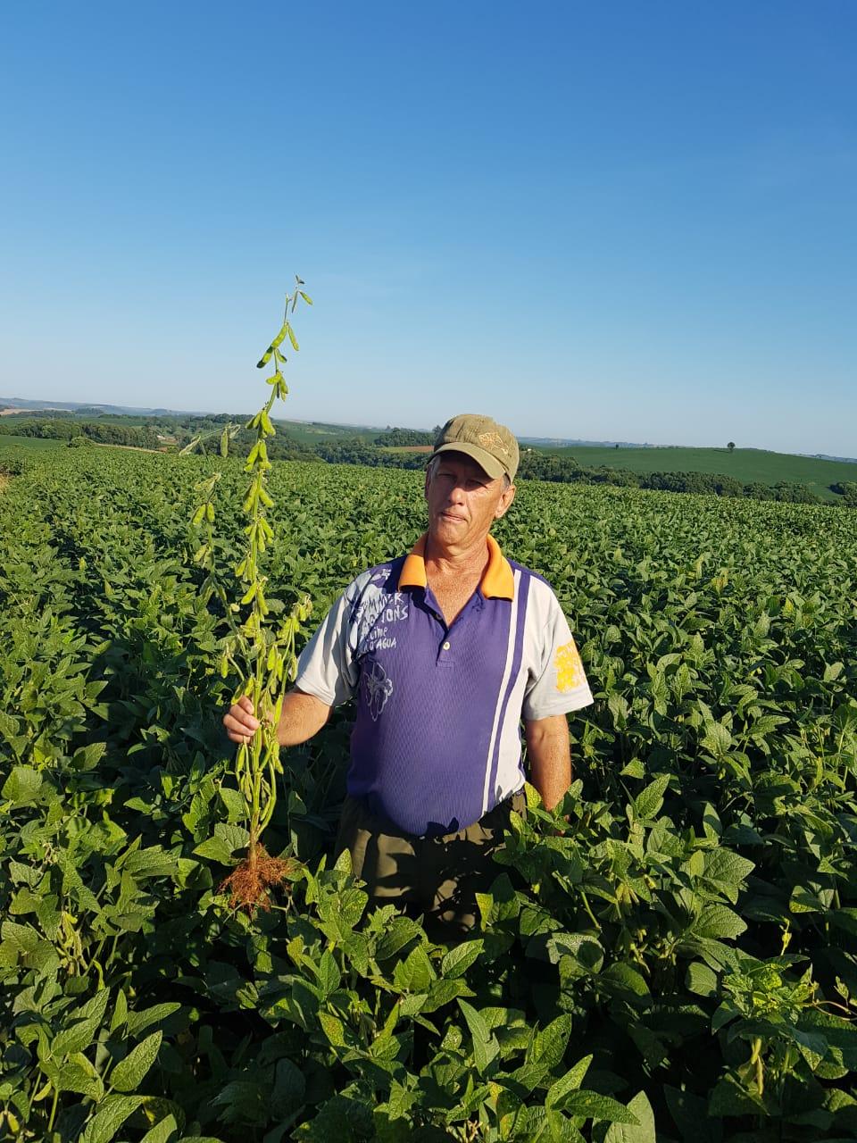 Lavoura de soja Variedade 54i52 ipro do produtor Neudir Rupollo em Barra Funda (RS). Envio do consultor técnico Luciano Colombo