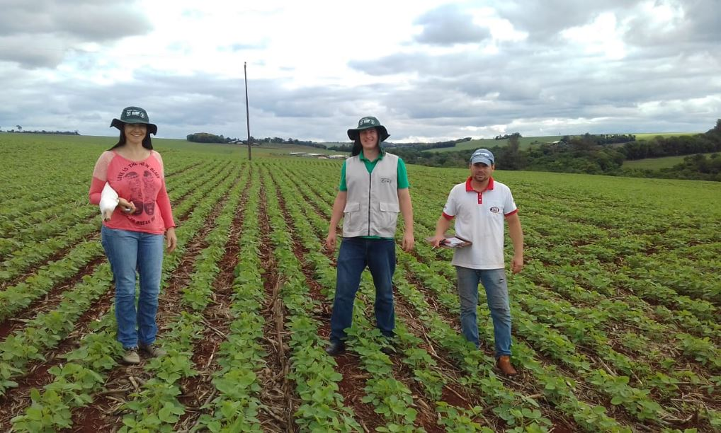 Produtores do Sindicato Rural, Senar ,Emater atuando no campo na prática do MIP em Palotina (PR). Envio de Edmilson Zabott