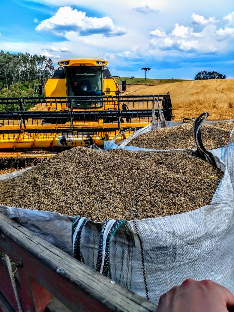 Colheita de Aveia Preta em Irati (PR). Envio do Técnico Agrícola Lucas Stroparo