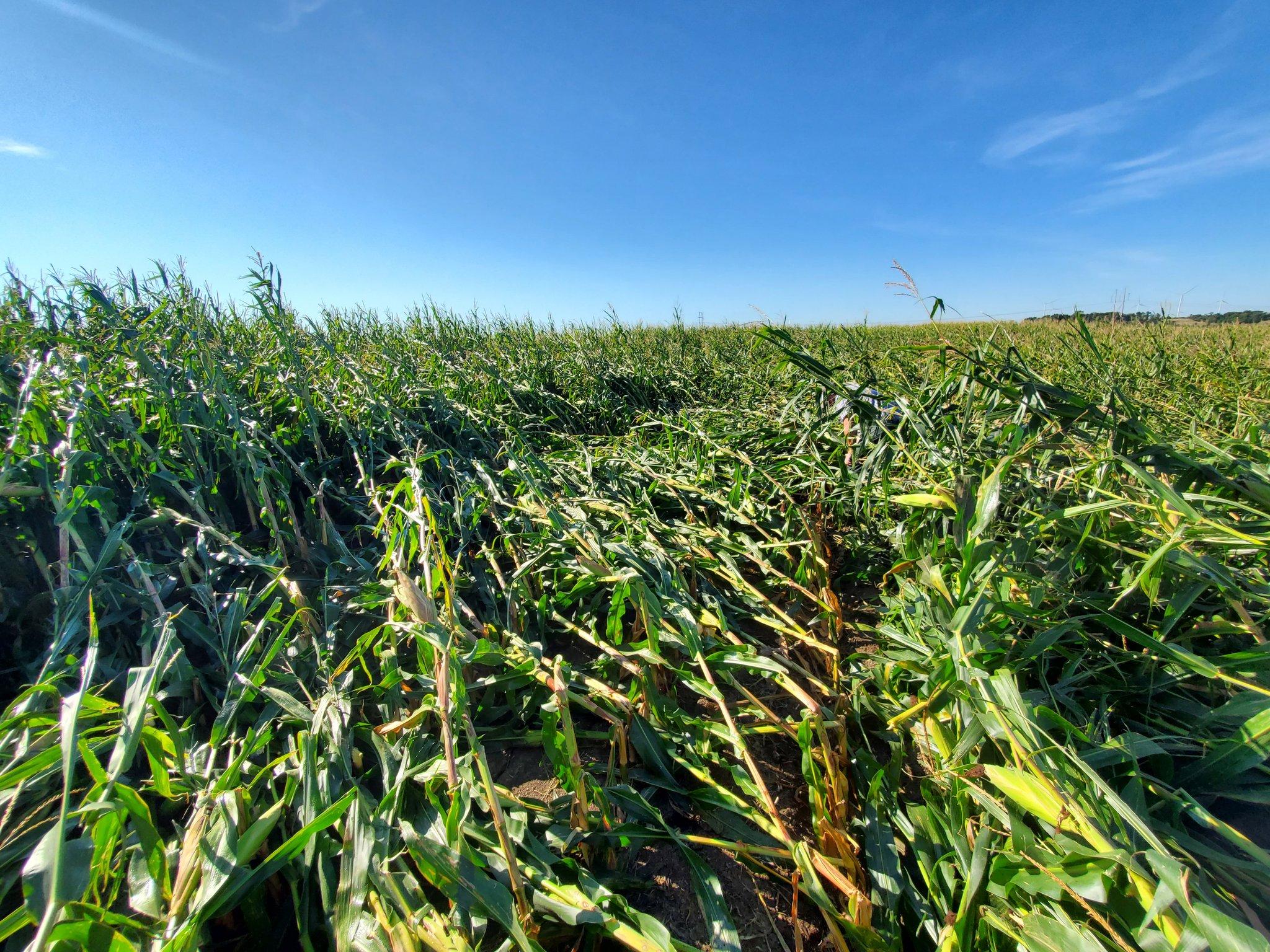 Milho Iowa - Pro Farmer 2020 - Foto: Jim Smith