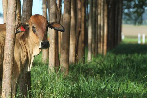 Integração lavoura-pecuária - Ruralcentro