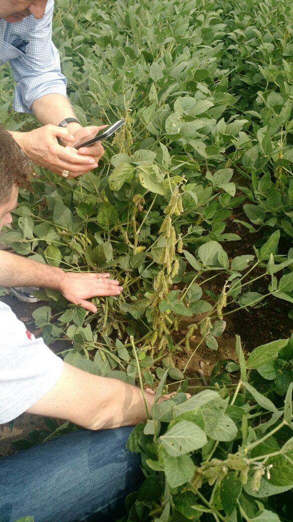 Tour EUA Labhoro - Lavouras de soja na cidade de Bremen, em Indiana (EUA)