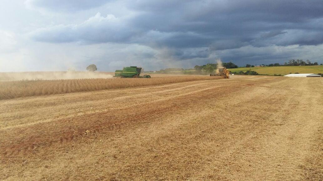 Colheita de soja na Agropecuária Beltramim, em Francisco Alves (PR)