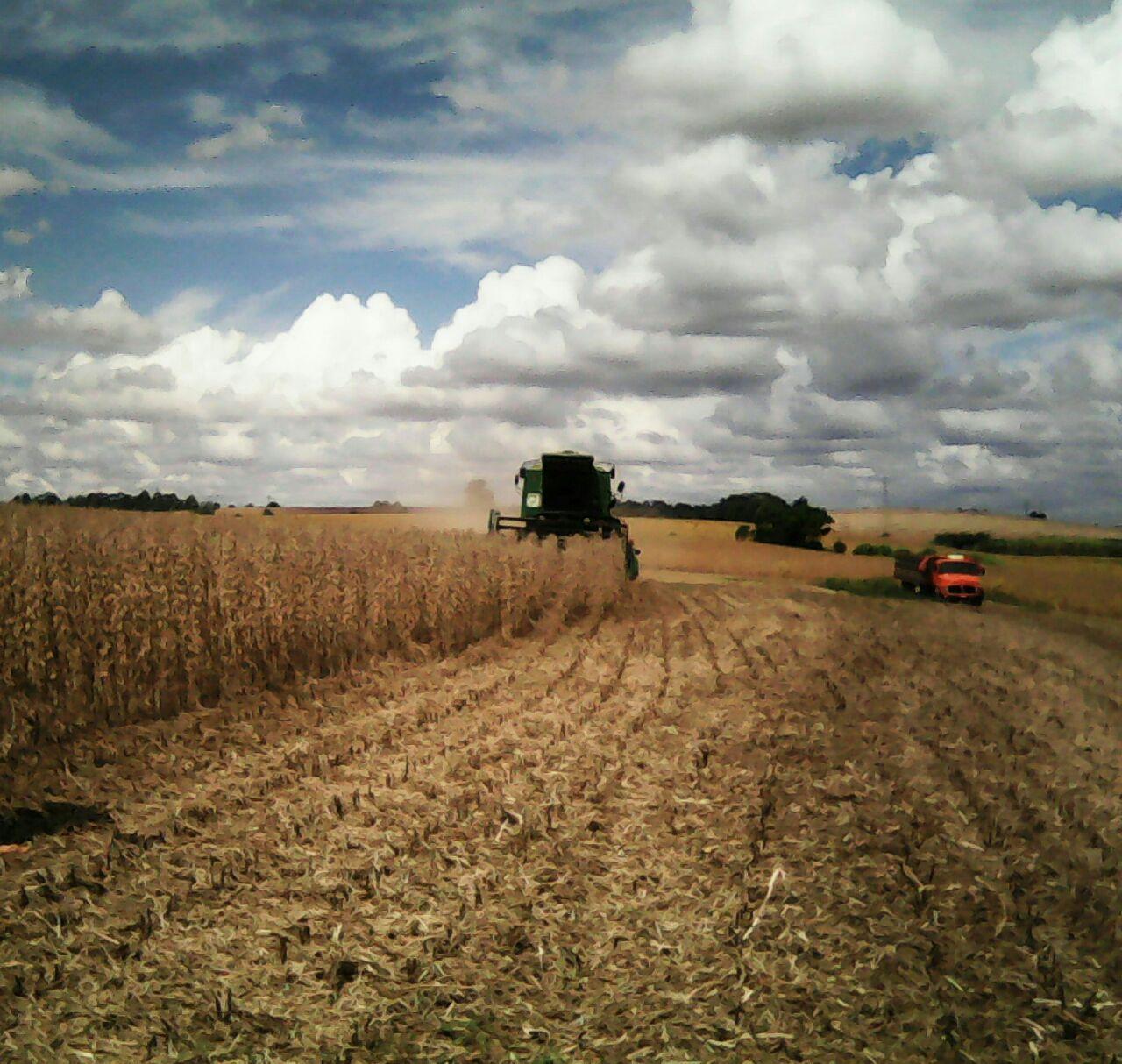 Colheita da soja em Coronel Barros (RS) na propriedade de Caio Hermann