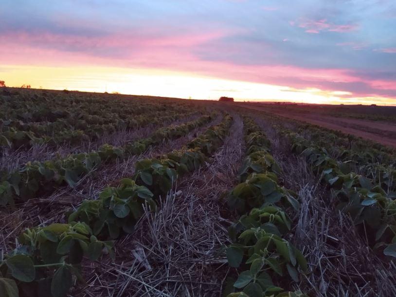 Soja, pôr do sol em Santa Cruz do Rio Pardo (SP). Envio de Edson Andreotti (ELTA).