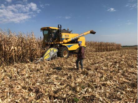Finalizando colheita de milho safrinha na RR Agropecuaria. Envio Willian raspolt