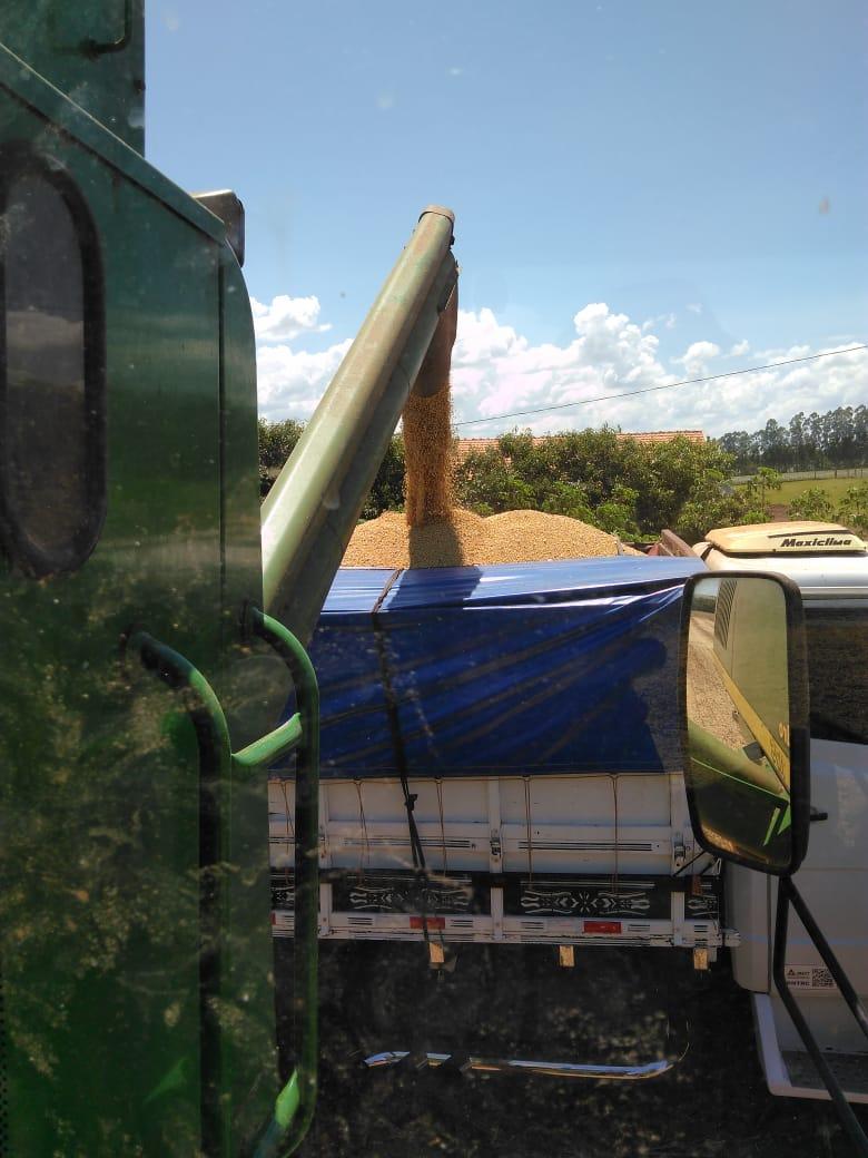 Início da colheita de soja da família Maldaner. Colheita antecipada devido à seca em Santa Helena (PR)