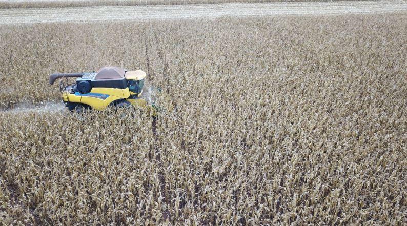 Colheita de milho família Orlovicks em Barretos (SP). Envio de João Orlovicks Neto