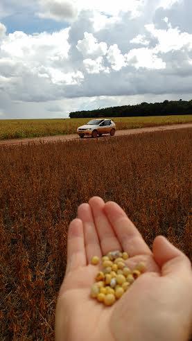Imagem do dia - Colheita de soja em Sapezal (MT). Envio de Alecxandro Bonato