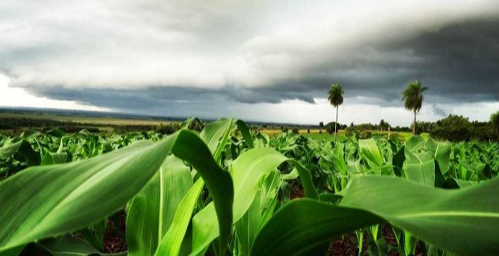 Foto pouco antes da chuva em Itaquirai (MS). Envio do Engenheiro Agrônomo Maicon Jorge da Copasul de Naviraí