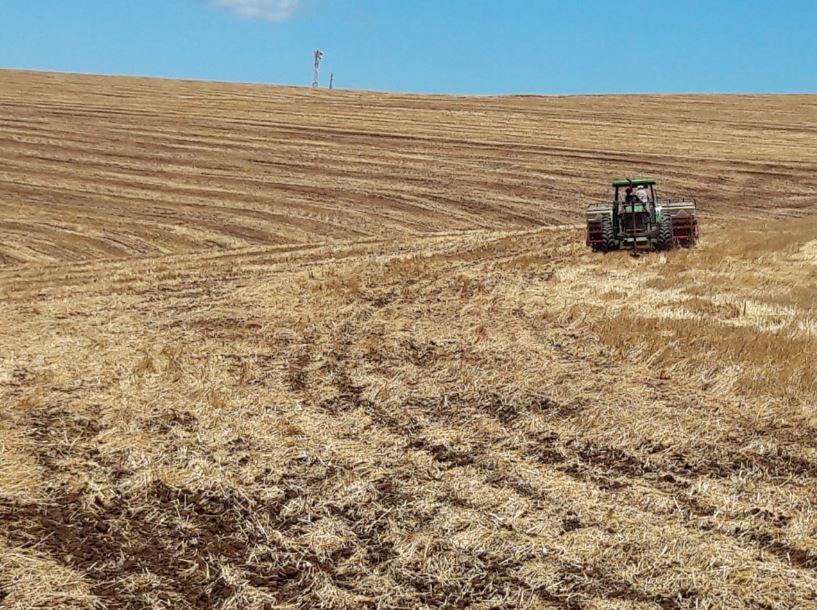 Terminando plantio de Soja na Faz Jaboticabal Família De Carli em Cel Vivida (PR). Helio de Carli