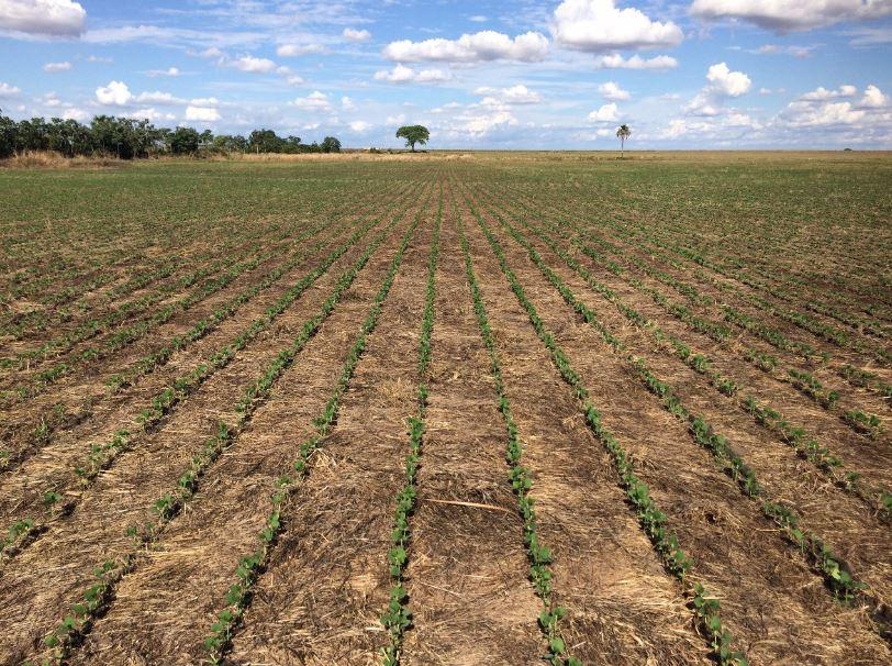 90% da semeadura da soja concluída em Rio Verde (GO). Envio de Alex Zamonaro