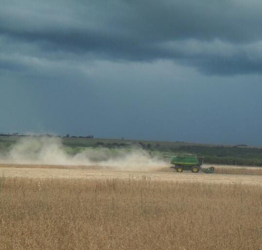Imagem do dia - Colheita de milho na região de Missal (PR). Imagem enviada pelo produtor rural, Fernando Strieder