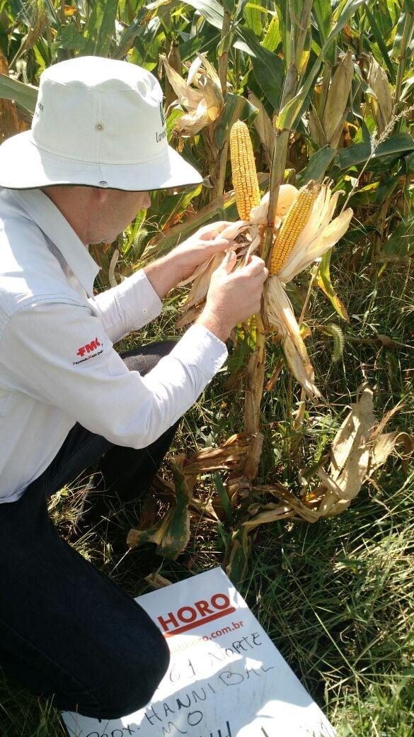 Lavouras de soja e milho na região de Silex/MO