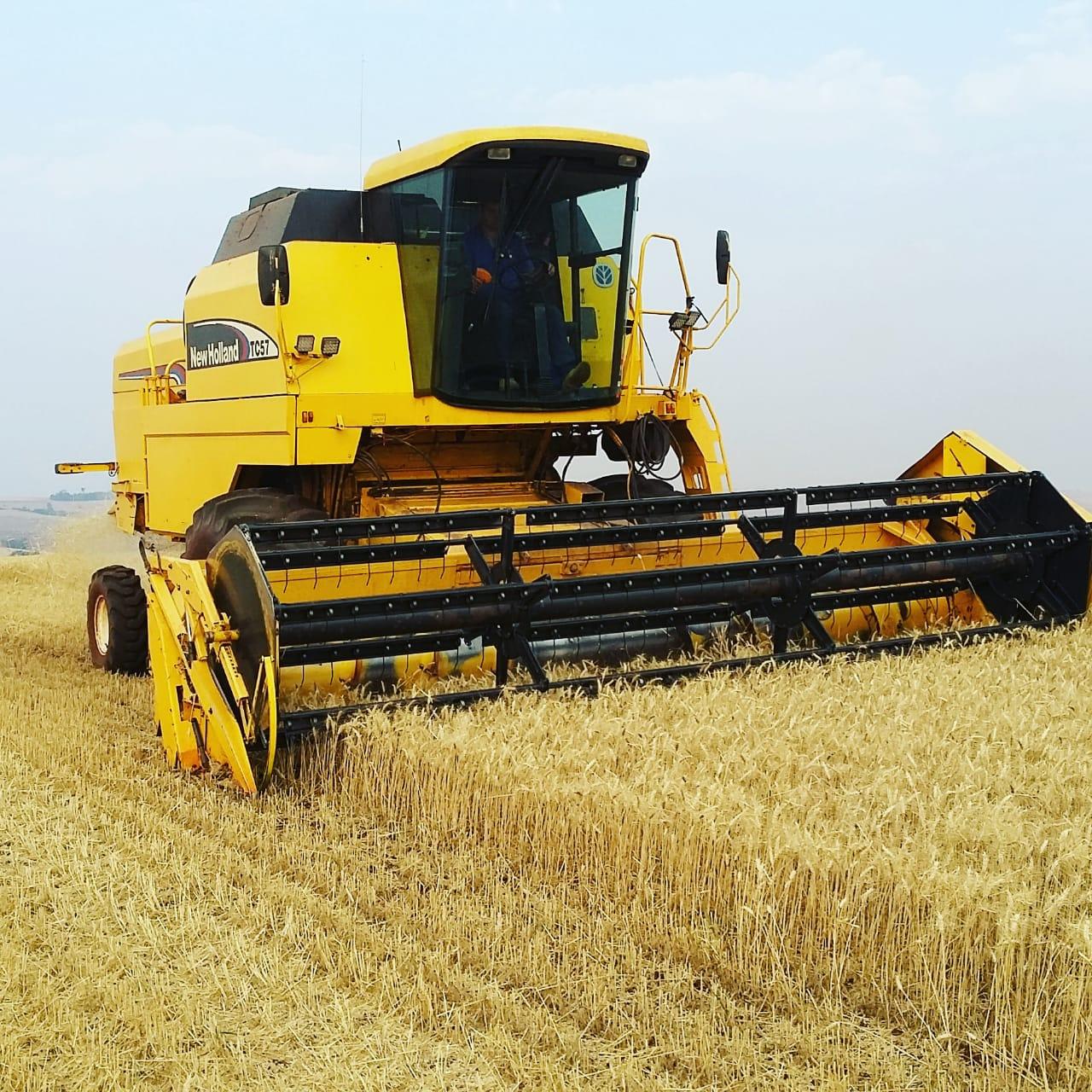 Final da colheita de trigo no Município de Nova Aurora (PR). Envio de David Clemente.