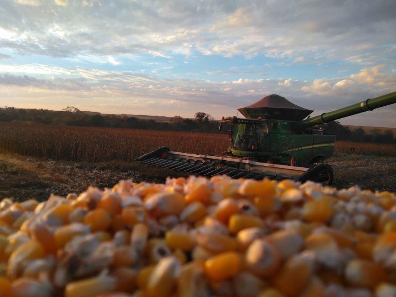 Colheita de milho Fazenda Jotabasso em Ponta Porã (MS). Envio de colaborador, técnico agrícola Diego Rafael Drews