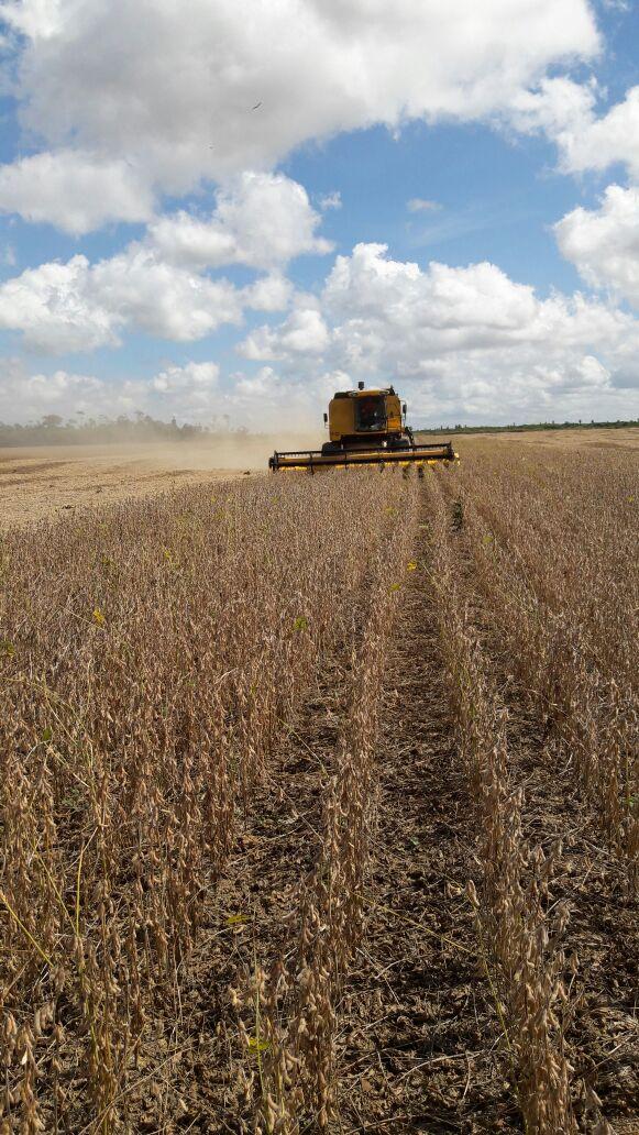 Imagens do dia - Colheita da soja no Pará. Envio de José Brina
