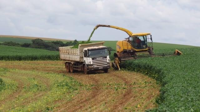 Imagem do dia - Colheita da silagem de soja em Coxilha (RS). Foto da Fazenda Sto. Isidoro/HS Sementes, enviada pelos engenheiros agrônomos, Joacir e Fernando Stedile.