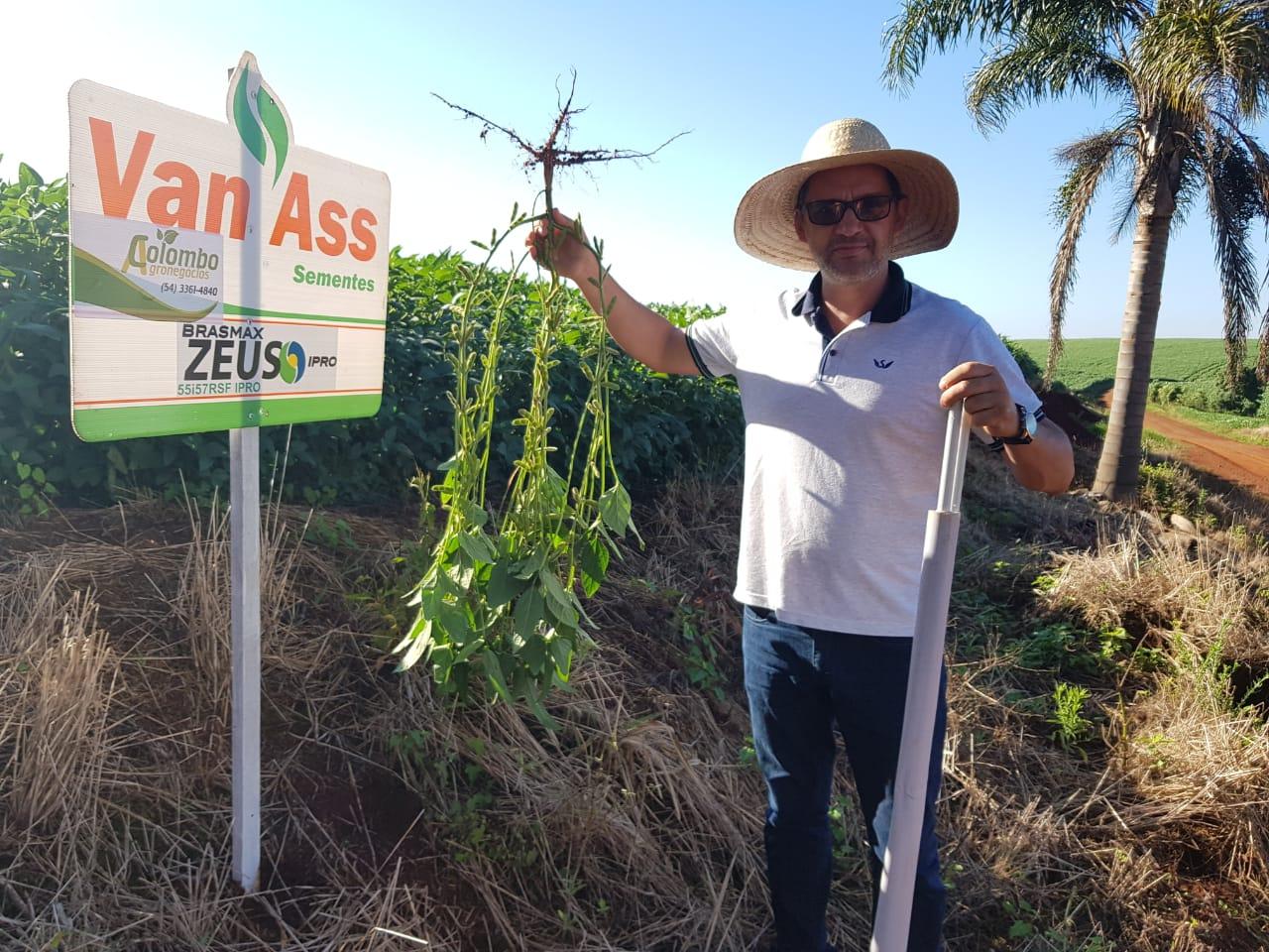 Lavoura de soja Variedade Zeus do produtor Iraldo Beckmann em Sarandi (RS). Envio de Tiago Colombo