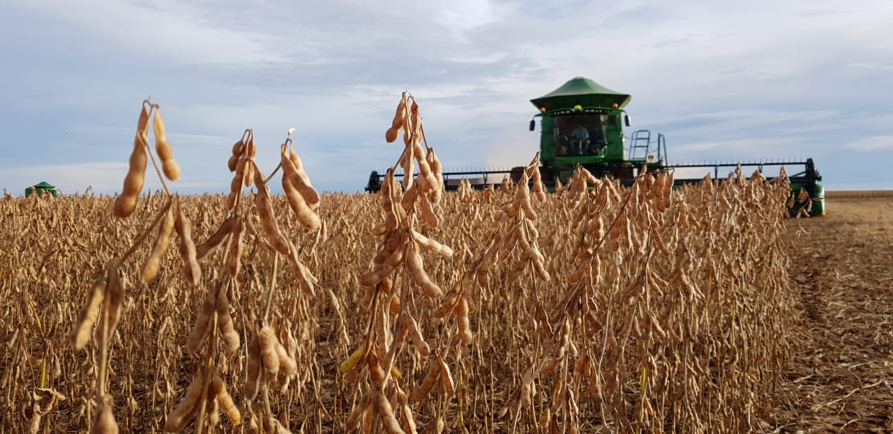 Colheita de soja no MT