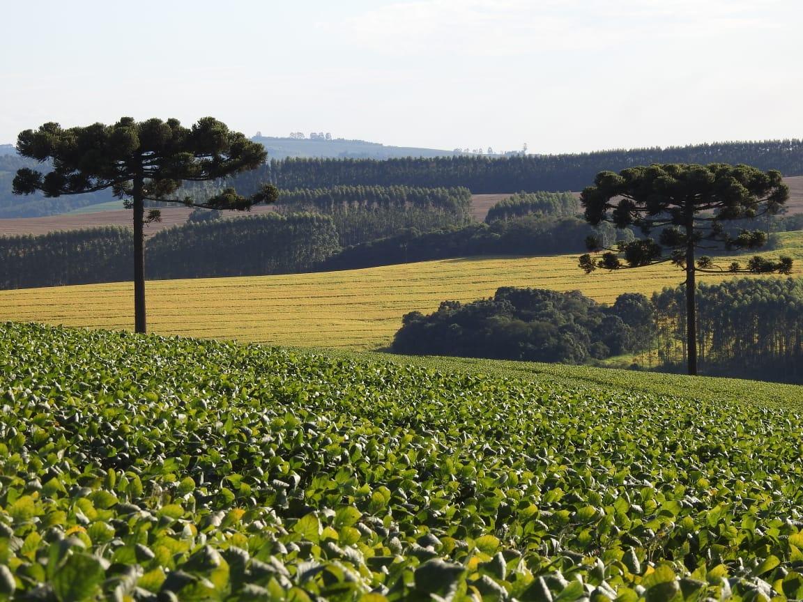 Paisagem maravilhosa, a rodovia BR376 esta entre a área verde e a amarela em Tibagi (PR) - Nilson Sovaszen Ribeiro