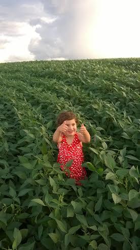 Imagem do dia - Isadora Plath Ferreira na lavoura de soja em Marilândia do Sul (PR), do produtor Jean Ferreira