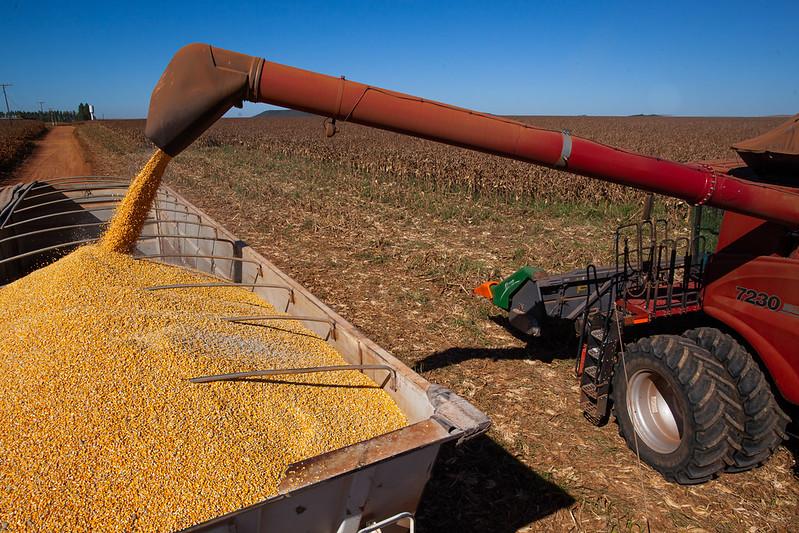destaque_grão_de_milho_caminhão_colheita_exportação_cn