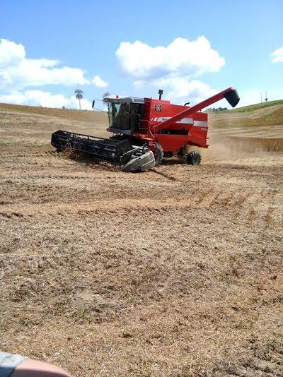 Colheita da soja na região de Ipiranga (PR). Foto do produtor rural, Márcio Menon.