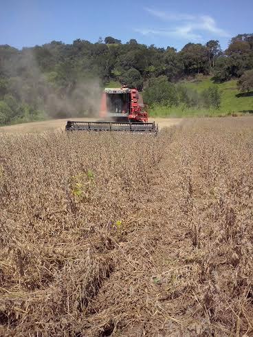 Imagem do dia - Colheita da soja em Quilombo (SC), do produtor rural Ari Vendrusculo