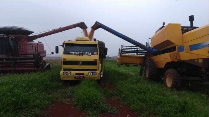 Colheita do milho na fazenda Santa Lúcia em Ourinhos (SP). Envio de Cachoni Cereais