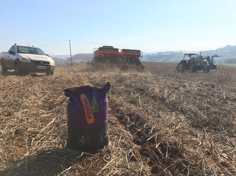 Inicio do plantio de milho na propriedade de Marcos e Vinicius Sartori Chagas em Rio dos Índios (RS). Envio do Eng. Agrônomo Niomar J. Dalbosco