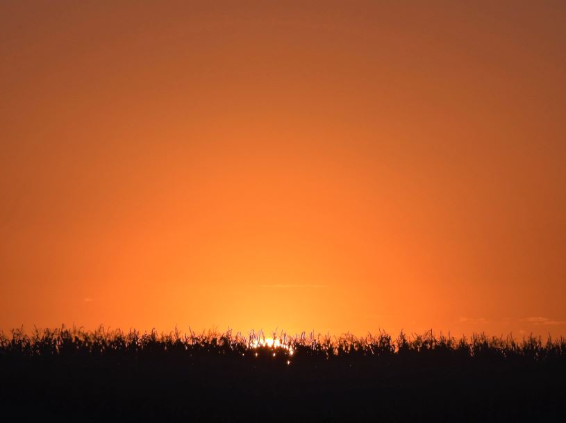 Pôr do sol no Milharal em Nova Mutum (MT). Envio de João Freire