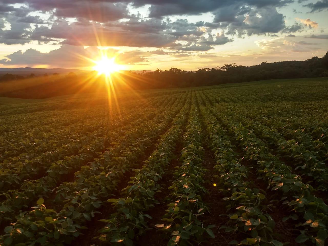O sol na Fazenda Ômega, em Padre Bernardo (GO). Envio de Aurélio de Andrade Mendonça